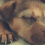 camas-para-perros