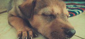 La importancia del descanso para tu perro