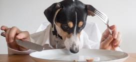 Comida casera para perros: ¿es buena idea?