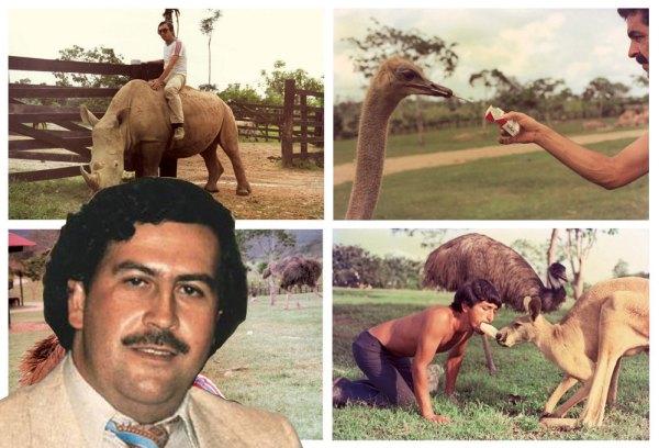 El capo de la droga nunca ocultó su amor por los animales y la naturaleza. Aquí, algunos de los animales de la Hacienda Nápoles.
