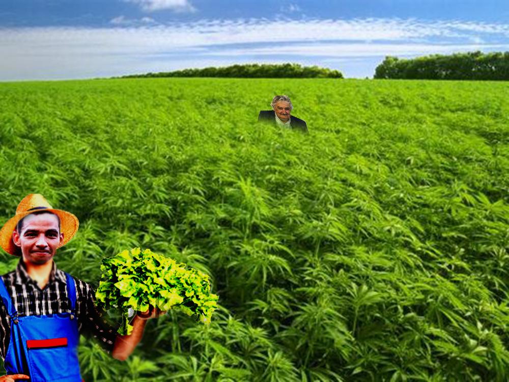 229073833_marihuana