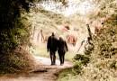 Quels sont les droits du conjoint survivant ?