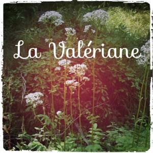 Read more about the article Retrouvez un sommeil de bébé avec la valériane