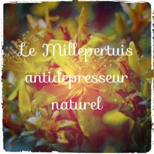 Le millepertuis: un antidépresseur efficace mais avec effets secondaires