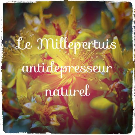 You are currently viewing Le millepertuis: un antidépresseur efficace mais avec effets secondaires