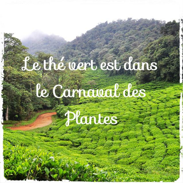 You are currently viewing Le thé vert est dans le carnaval des articles de Février