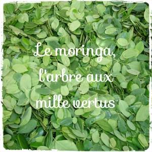 Le Moringa, l'arbre miracle aux incroyables vertus (Mouroum)