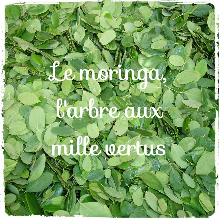 Le Moringa, l'arbre miracle