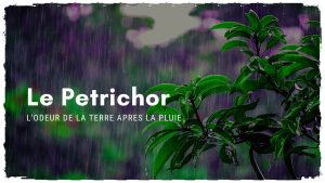 Comment le Petrichor peut-il vous donner un bien être inégalable?