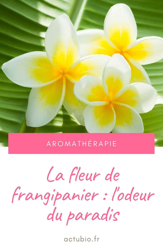 Fleur de frangipanier : propriétés et bienfaits