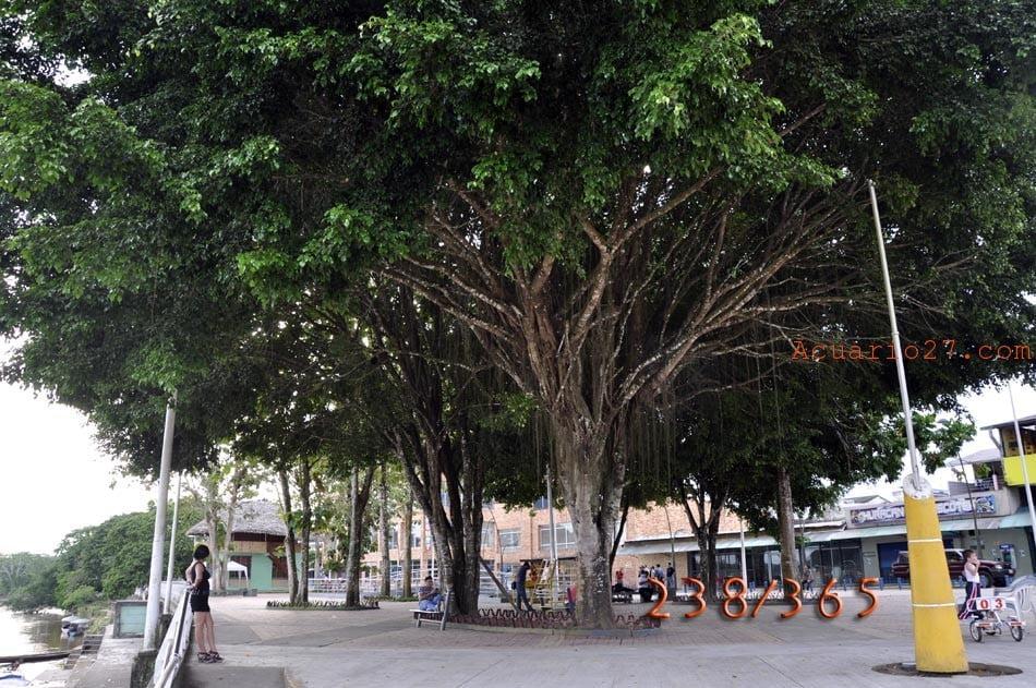 238/365 árbol en Francisco de Orellana.