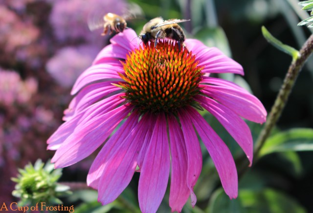 Bees on a purple flower