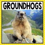 There are so many different groundhog activities that you can do at home or in the classroom. This page allows you to quickly see our favorite groundhog ideas, activities and printables that have been featured on A Dab of Glue Will Do.