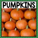 There are so many different pumpkin activities that you can do at home or in the classroom. This page allows you to quickly see our favorite pumpkin ideas, activities and printables that have been featured on A Dab of Glue Will Do. Click here to see all things fall.