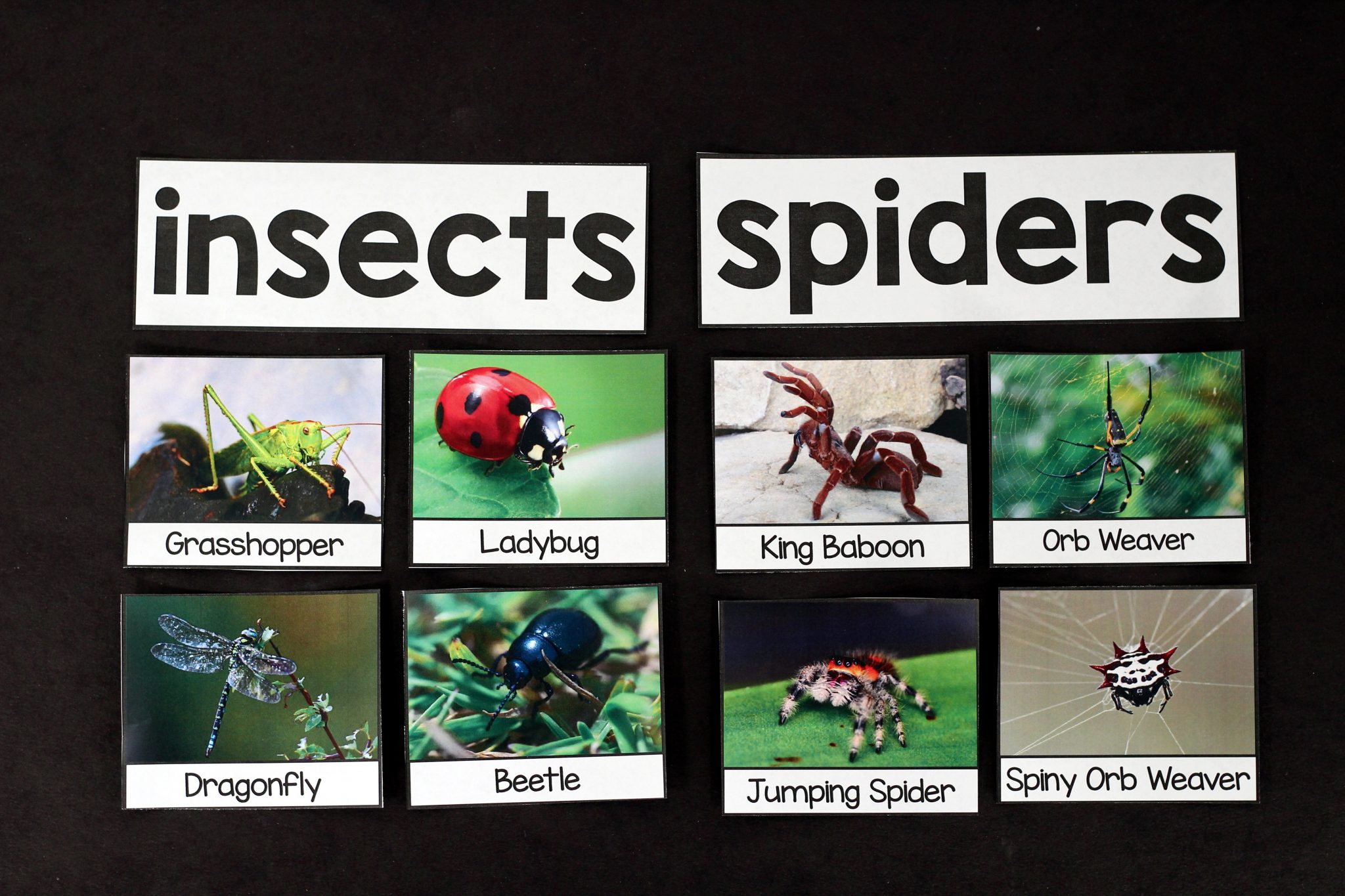 Spiders An Animal Study