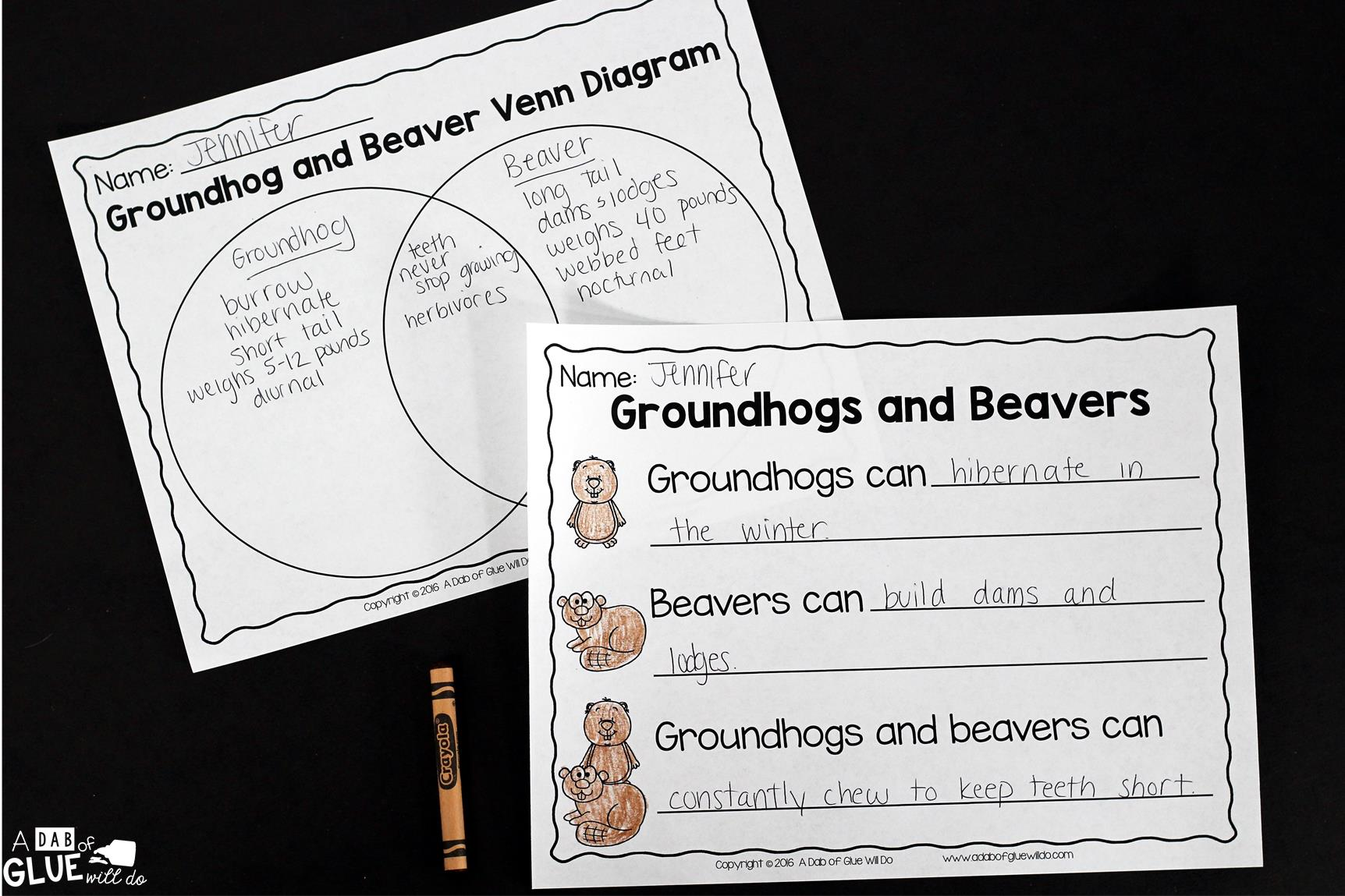 Groundhog Facts Animal Study