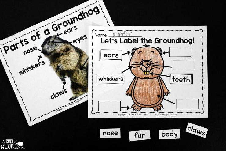 Animal Study: Don't miss our Groundhog Facts Animal Study full of great information, activities, and learning projects ideal to help your students learn!