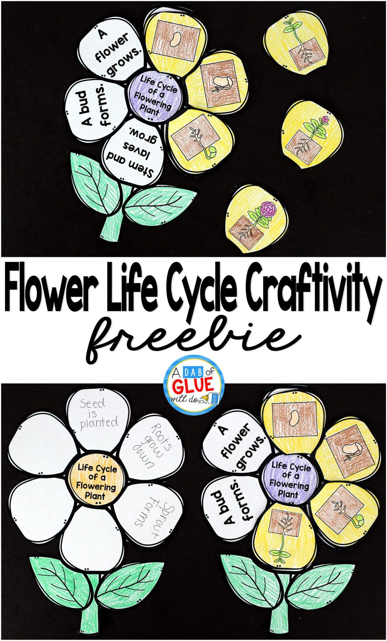 Flowering Plant Life Cycle Craftivity