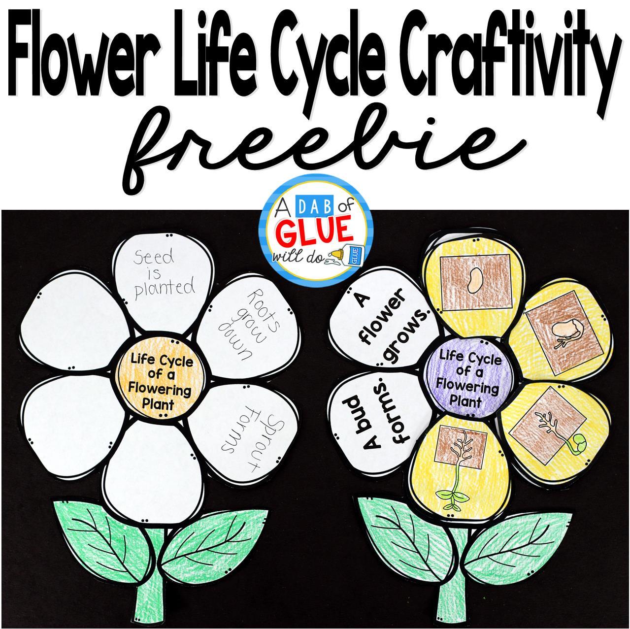 Flower Life Cycle Worksheet