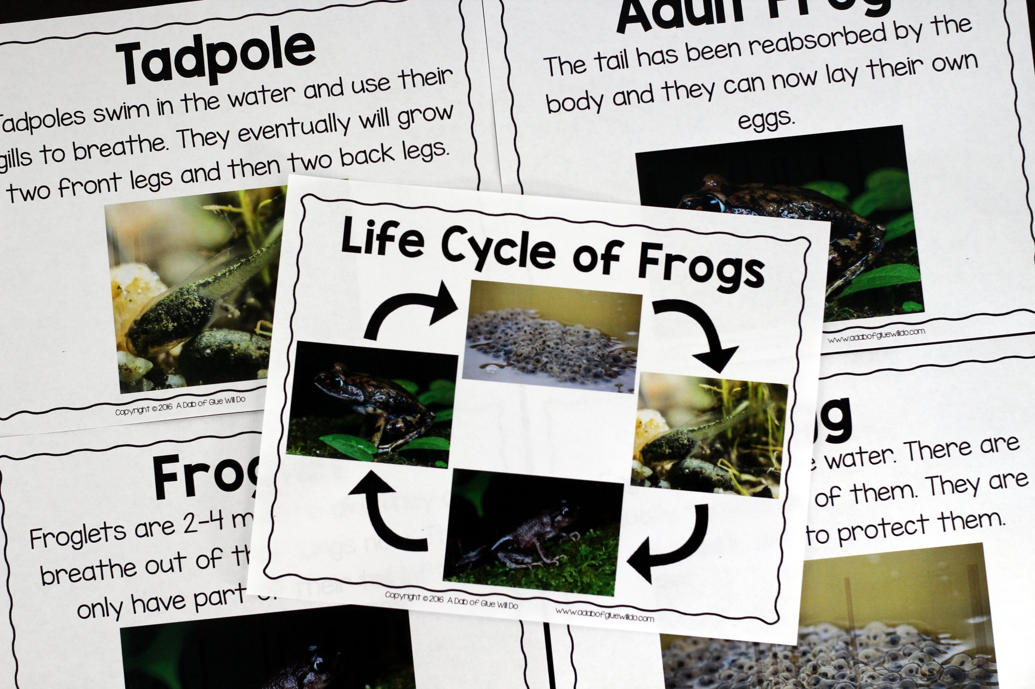 Frogs An Animal Study