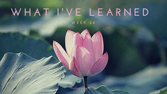 What I've Learned — Week 24
