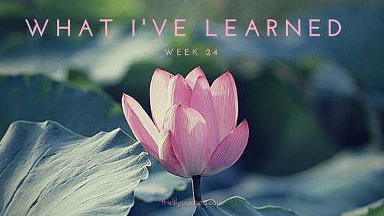 What I've Learned -- Week 24