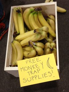 Get your free monkey trap supplies here!