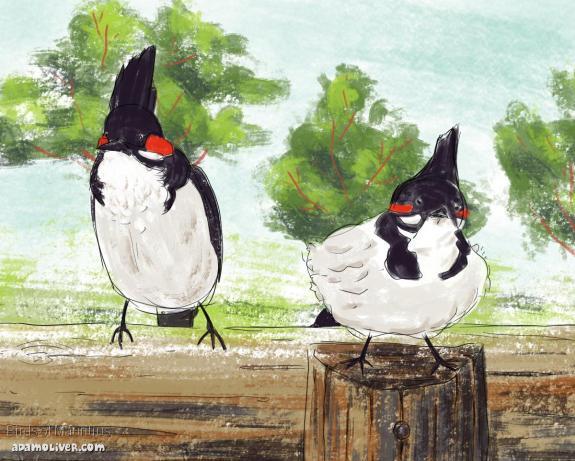 Mauritius-birds
