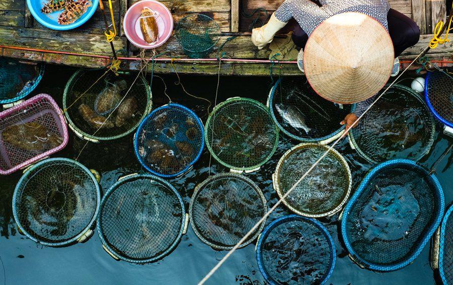 Fish vietnam