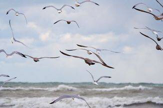gull-deterrents-1_80548_990x742