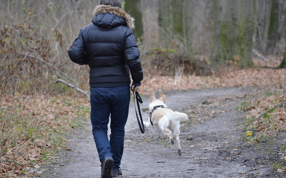 Quelles qualités faut-il pour devenir comportementaliste canin ?