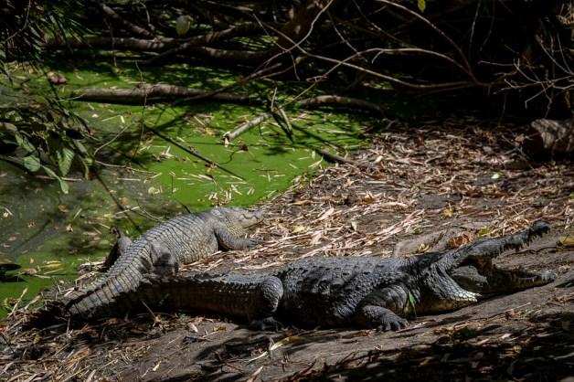 Crocodile Pool w Bakau
