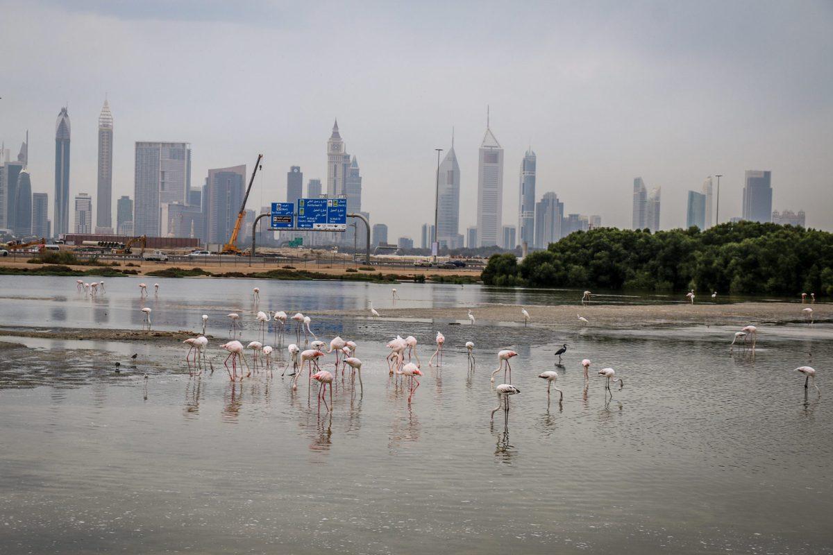dubaj_flamingi