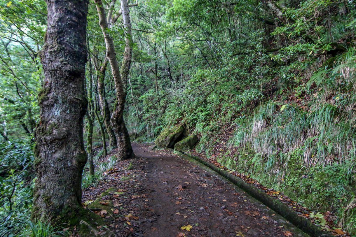 madera_atrakcje