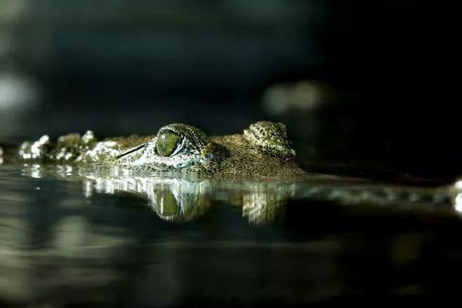 كيف يؤثر مخدر التمساح على الجسم