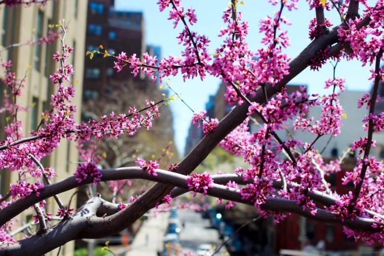 High Line Park Flowers