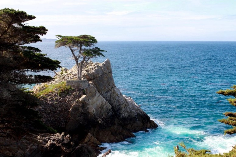 17 mile drive at pebble beach lone cypress tree