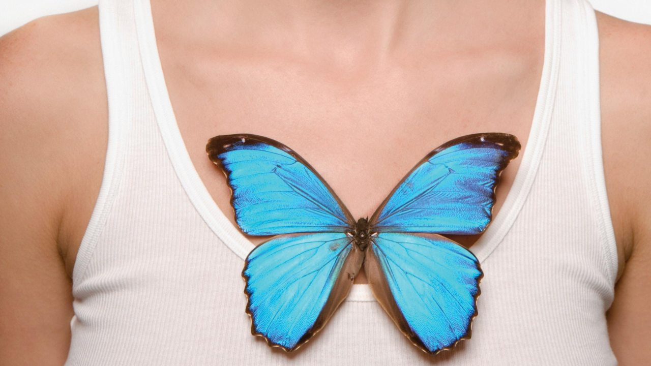 A blue butterfly representing acceptance and commitment therapy