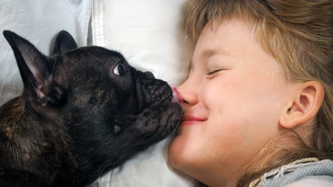A dog licks the face of a child with ADHD to wake him up in the morning.