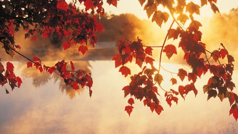 Autumn leaves. Vivaldi's 'The Four Seasons' is often used in music therapy for children with ADHD.