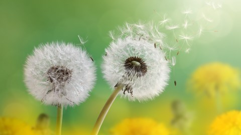 Dandelion fuzz blows away into the distance, a metaphor for letting go of stress with ADHD