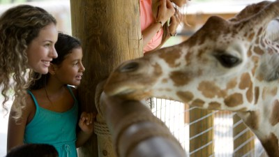 Family using the free summer schedule to visit giraffes at the zoo