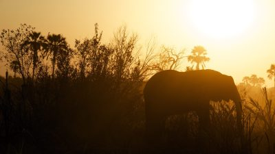 Elephant in africa symbol of good memory for people with ADHD