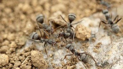 Get along with colleagues like worker ants