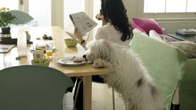 A dog steals toast from a woman with ADHD who is distracted reading the newspaper
