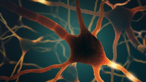 Neurons in the brain that may lead to signs of adult ADHD