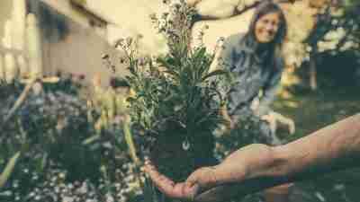 My Crowded Garden, A Symbol of My ADHD Mind