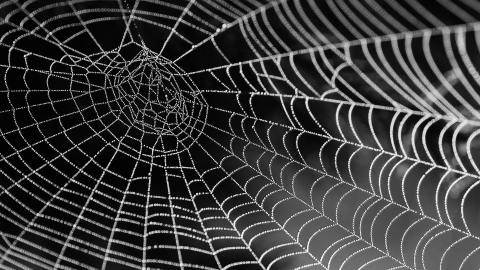 A spiderweb symbolizing ADHD emotionality