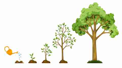 Stages growth of tree from seed. Watering the plants. Collection of trees from small to large. Green tree with leaf growth diagram. Business cycle development.