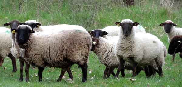 adebcosne_pastoralisme_1.jpg